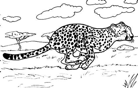Cheetah Kleurplaat by Baby Cheetah Coloring Pages Coloring Home