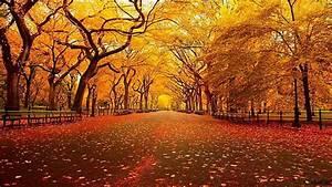 Hd, Wallpaper, Park, 4k, 8k, Autumn, 5k, Leaves, Trees