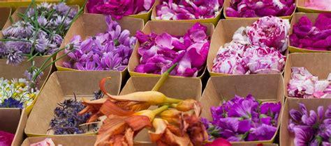cuisiner avec les fleurs des fleurs dans nos assiettes