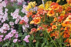Was Passt Zu Rosen : blumen nach farben was passt zu gelb und orange ~ Lizthompson.info Haus und Dekorationen
