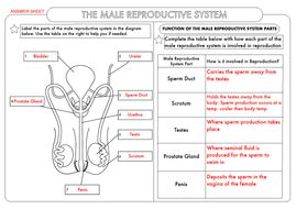gcse biology human reproduction worksheet by beckystoke teaching resources