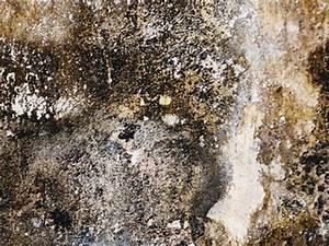 Weißer Schimmel An Der Wand : schimmelpilzarten von aspergillus niger bis penicillium ~ Michelbontemps.com Haus und Dekorationen