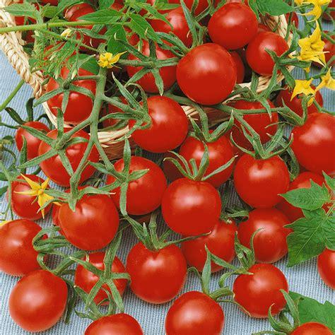 tomato seeds sweetie