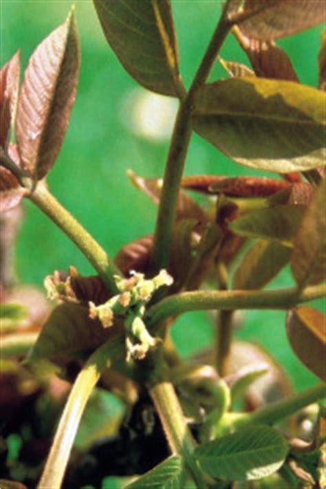 fiori di bach opinioni i rimedi floreali di bach