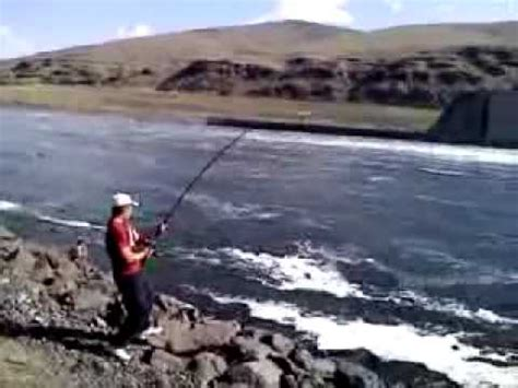 sturgeon fishing lower granite dam