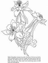 Columbine Colorado Coloring Designlooter Inkspired Musings sketch template