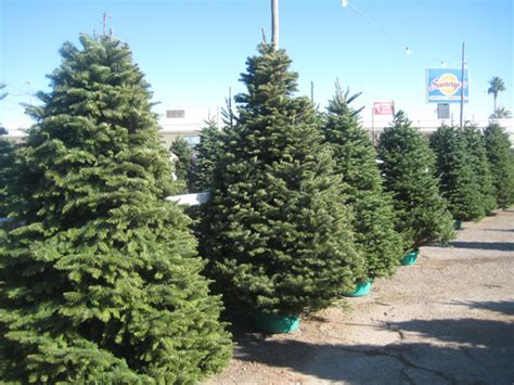 salt lake christmas tree lots tree lot now open boulder city home of hoover dam lake mead