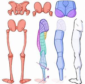 Pin By G Guide   Anatomy Reference