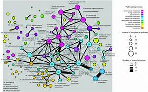 Crosstalk Between Metabolic Pathways  The Network Diagr