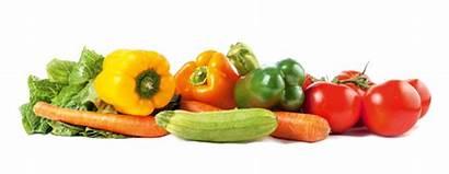 Vegetables Mixed Farm Way Troy Ny Acres