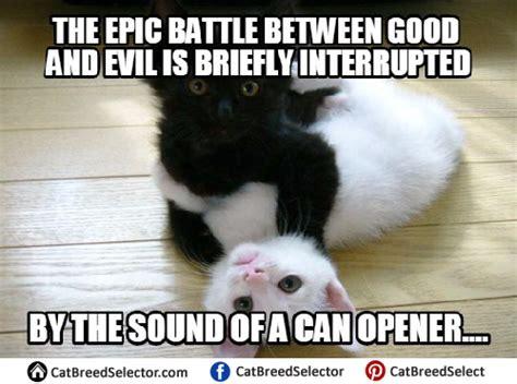 Evil Cat Meme - i a m a w o l f