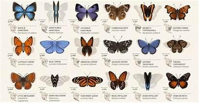 Butterflies Animated America Map North Poster Adafruit