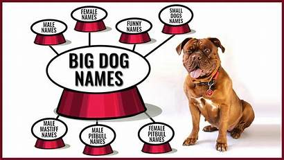 Names Dog Dogs Backed Meanings Petmoo