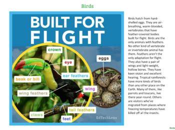 Animal Types: Rainforest Birds Distance LearningTpT