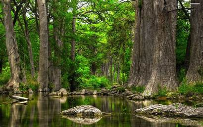 Peaceful Scenery Forest Wallpapers Wallpaperplay