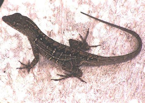 good reptiles  amphibians   garden hgtv
