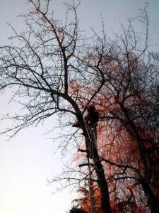 Was Kostet Baum Fällen : baum f llen der gartenratgeber ~ Orissabook.com Haus und Dekorationen