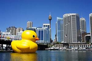 Adventuring Sydneyside Darling Harbour And The Giant Duck