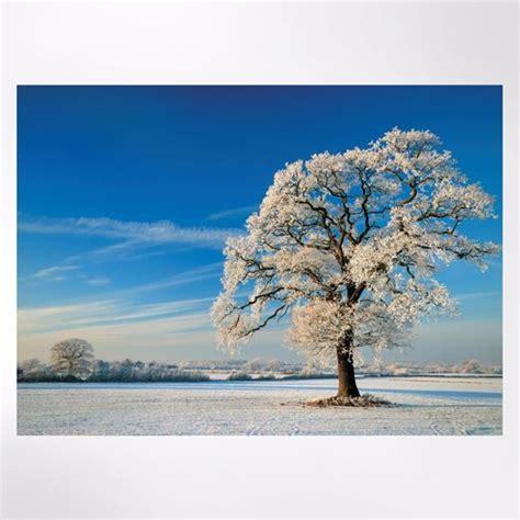 winter tree christmas cards woodland trust shop