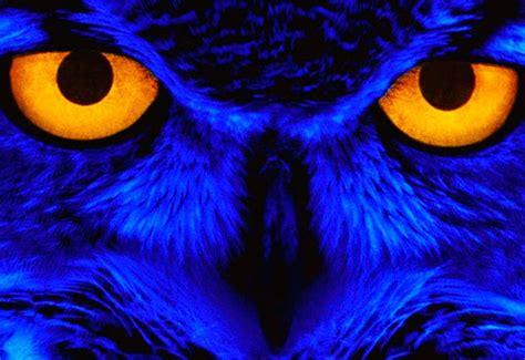 los ojos mas hermosos  impresionantes del reino animal
