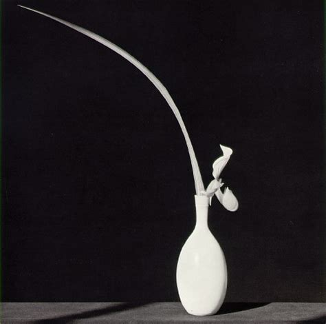 mapplethorpe fiori and place exhibition quot robert mapplethorpe quot