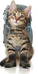 backpack for cats backpackers llc