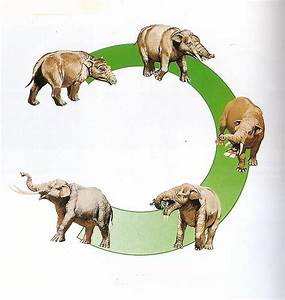 Woolly Mammoth to Elephant Evolution