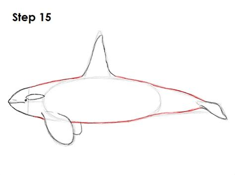 draw  killer whale video step  step pictures