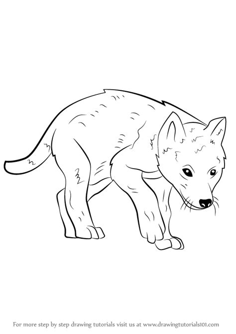 learn   draw  wolf pup wild animals step  step