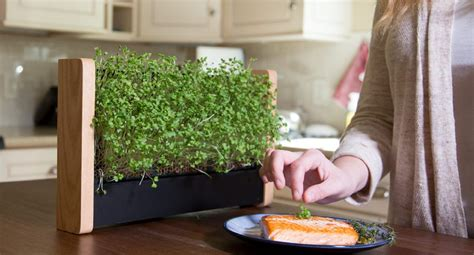 indoor gardening inhabitat green design innovation