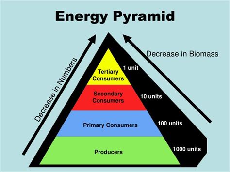 energy pyramid ocean food webs biomass producers chains primary consumers numbers units secondary ppt powerpoint presentation unit decrease 1000 slideserve