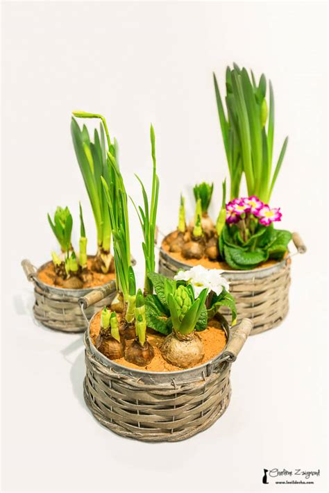 plantes grasses fleuries interieur 28 images le schlumbergera est une plante grasse qui
