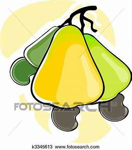 Drawing of Cashew nut fruit k3345613 - Search Clipart ...