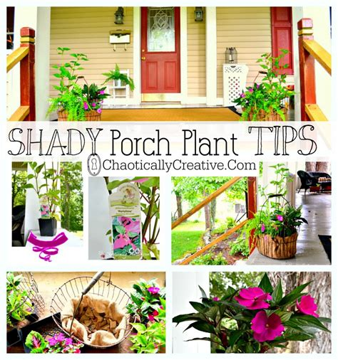 shady porch plants