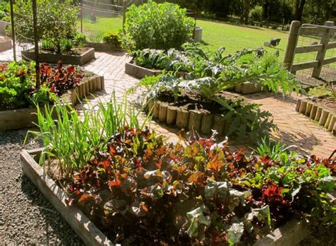 vegetable patch 5 tips for growing tasty garden vegetables everywhere