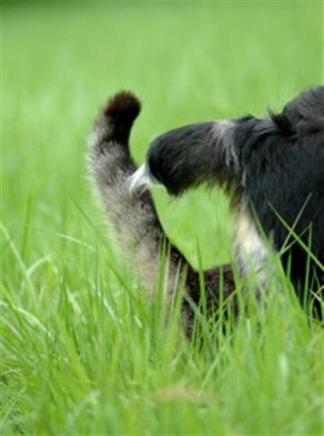 katzenverhalten koerpersprache und lautsprache tierfreund