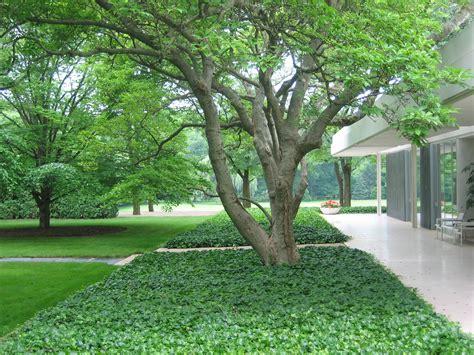 miller garden dan kiley a great yet little known modernist gardens eero saarinen and daniel o connell