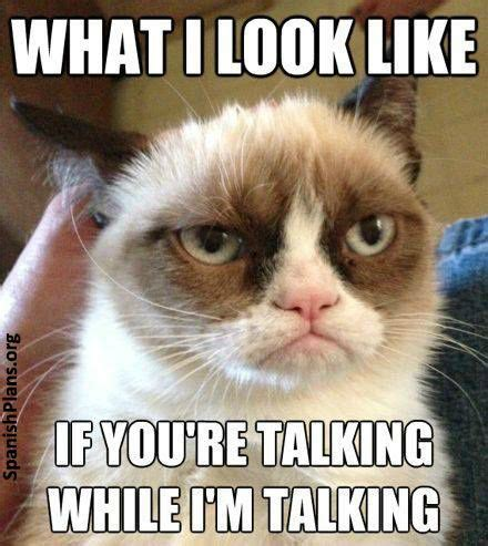 Talking Cat Meme - teacher memes grumpy cat meme classroom rules and grumpy cat