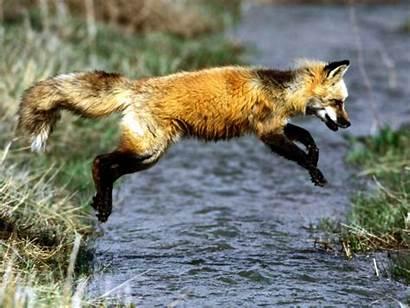 Animals Wild Animal Wildlife Fox Nature Photographs
