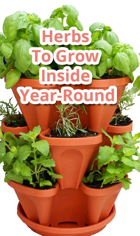 Herbs That Can Grow Inside by Tips About Herbs To Grow Inside Year Tips