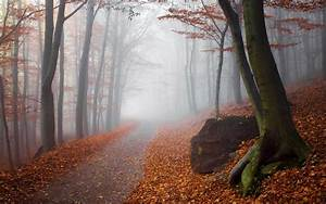 Landscape, Nature, Fall, Mist, Forest, Path, Sunrise, Trees, Leaves, Sunlight, Wallpapers, Hd