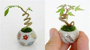 Ultra small bonsai plants give new meaning to the word for Ultra small bonsai plants give new meaning to the word miniature