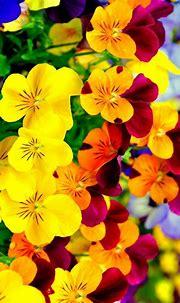 Bright Flowers Wallpaper iPhone - 3D iPhone Wallpaper