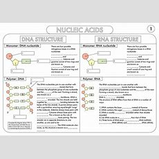 A Level Biology Worksheet Pack On Dna And Protein Synthesis By Beckystoke  Teaching Resources Tes