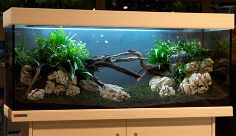 Oliver Knott Aquascaping by Aquascaping Aquascaping Tipps Oliver Knott