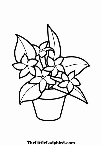Coloring Plants Pages Jungle Rainforest Drawing Flowers