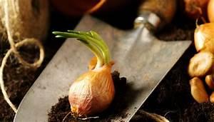 Welche Balkonpflanzen Ab März : welche pflanzen bereits ab m rz gepflanzt werden k nnen ~ Whattoseeinmadrid.com Haus und Dekorationen