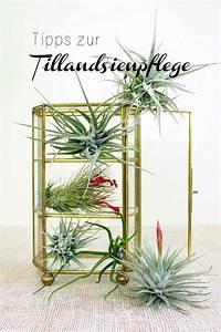 Tillandsien Im Glas : 37 besten garten bodendecker bilder auf pinterest bodendecker garten und pflanzen ~ Eleganceandgraceweddings.com Haus und Dekorationen