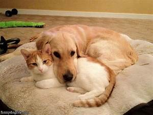 All The Things You Know If You U0026 39 Re Both A Cat And Dog Person