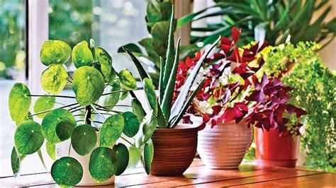 tanaman obat bisa jadi hiasan indoor